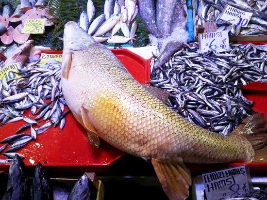 Fırat'ın En Lezzetli Balığı