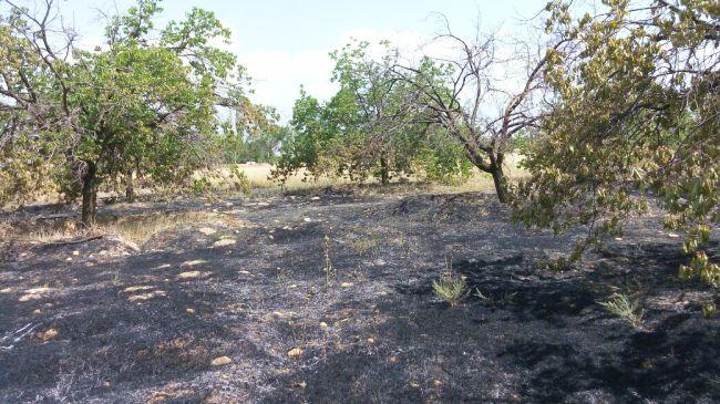 Kayısı Bahçesinde Yangın Çıktı