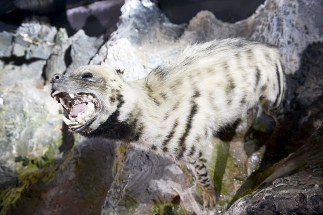 hayvan1