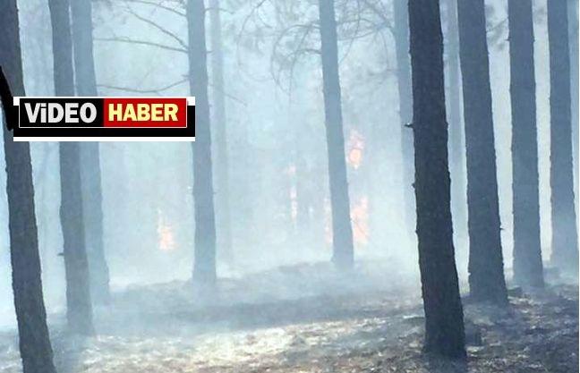 Pütürge'de Orman Yangını