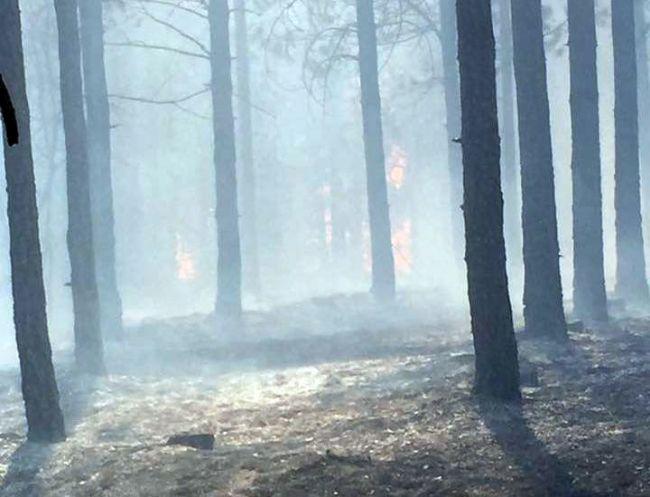 yangınorman4 1
