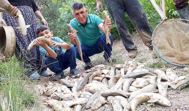 Tohma'ya Sel Geldi Balıklar Kıyıya Vurdu
