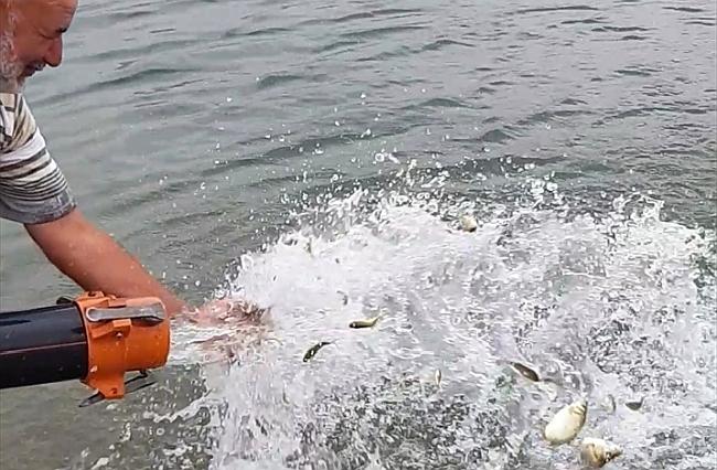 Karakaya Gölüne 2,6 Milyon Yavru Balık
