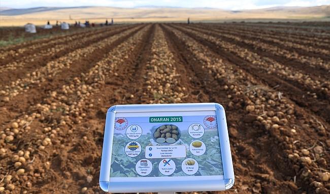 Yerli Tohum Patateste Malatya Ekimi Başarılı