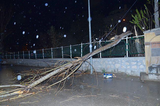 Fırtına Ağaç Değirdi