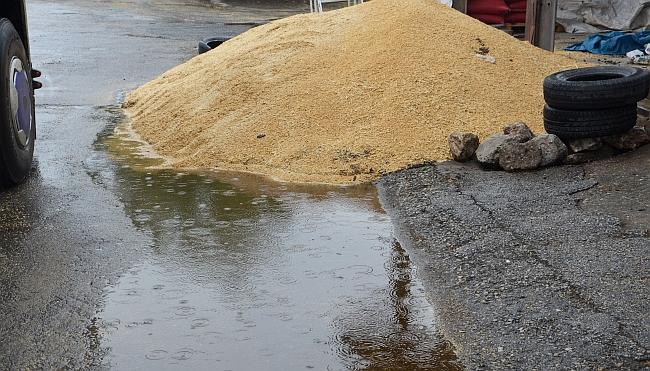 Buğday Pazarı'nda Yağmur Zararı