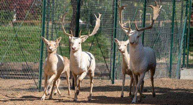 Hayvanat Bahçesi Nüfusu Doğumlarla Arttı
