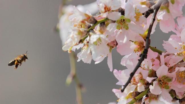 'Dağlarına Bahar Gelmiş Memleketimin'