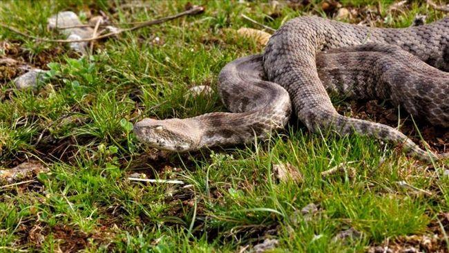 'Yılanlar Öldürülmemeli' Uyarısı