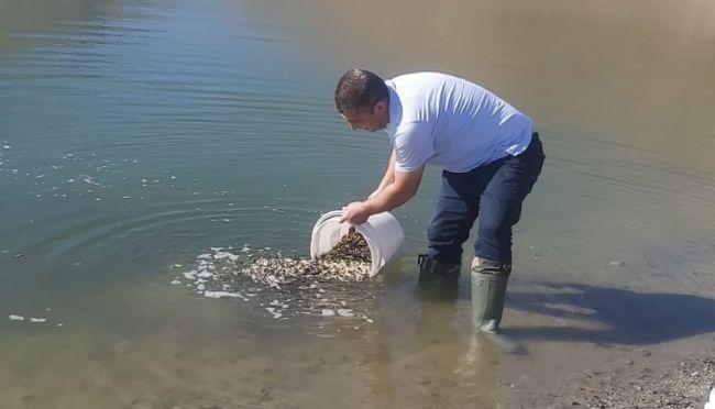 Baraj Göllerine Yavru Balık