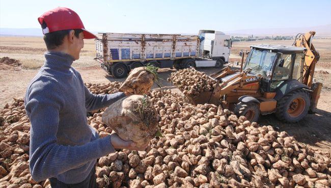 Malatya Çiftçisi Şeker Pancarı ve Yem Bitkilerine Yöneldi