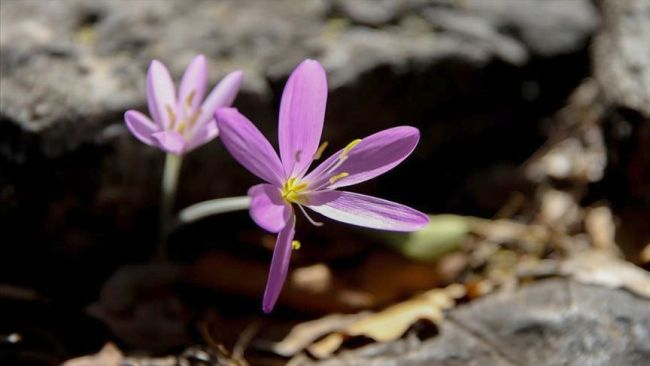 Koruma Altındaki Çiçek