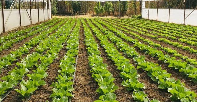 Organik Tarım Başvuruları