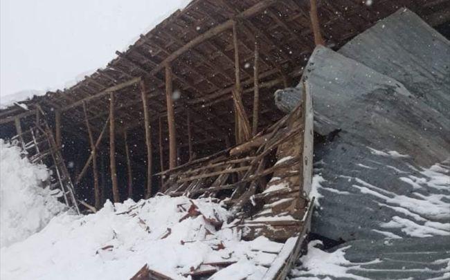 Kar Nedeniyle Ahır Çöktü, 6 Hayvan Yaralandı