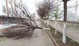 Fırtına Ağaç Devirdi