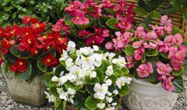 Büyükşehir Belediyesi 515 Bin Çiçek Satın Alacak