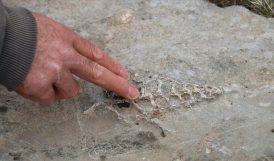 Adıyaman'da 70 Milyon Yıllık Fosil