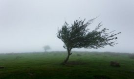 Meteoroloji'den Fırtına Uyarısı Yapıldı
