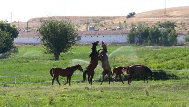 sultansuyu arazi1