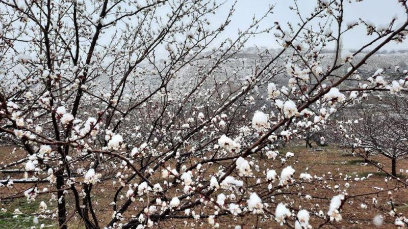 Kuluncak'ta Kar Yağışı Üreticileri Endişelendirdi