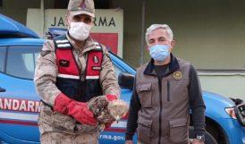 Jandarma Devriyesi Yaralı Kızıl Şahin Buldu