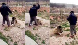 Yazıhan'da Köpek Döven Yabancıya Tepki Büyük