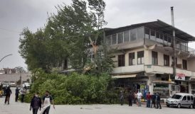 Rüzgarın Kırdığı Ağaç Dalı Otomobile Zarar Verdi