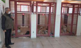 Belediyenin Şefkat Eli: Geçici Hayvan Barınağı