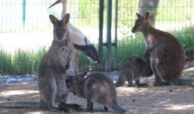Hayvanat Bahçesi'nde 14 Yeni Yavru