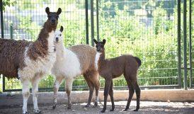 Hayvanat Bahçesinde 78 Türde 1250 Hayvan