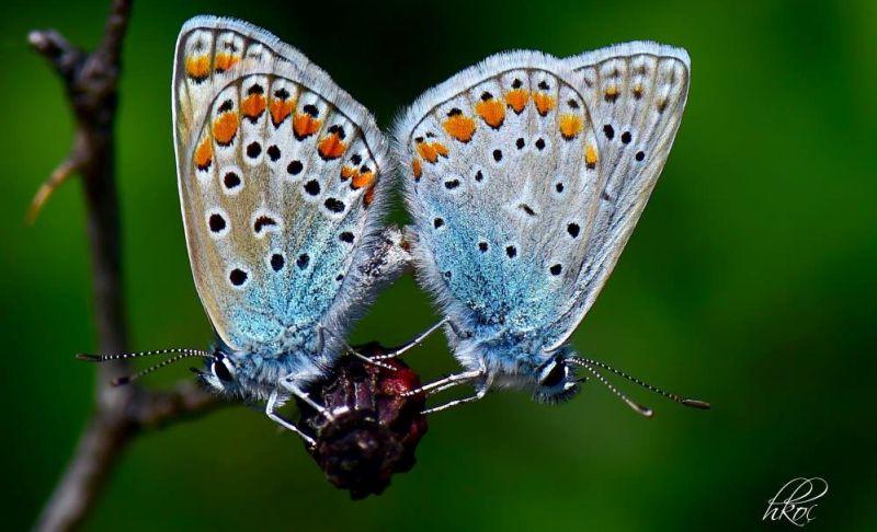 kelebek huseyin3