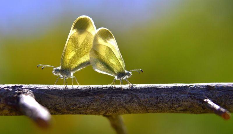 kelebek huseyin6
