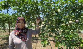 Passiflora Ekti, Taleplere Yetişemiyor
