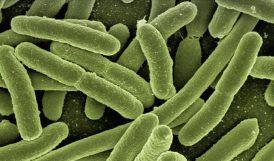 Binlerce Yıllık Buzda 28 Virüs Çıktı