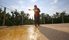 Malatya'da 'Haşhaşlı Dut Pestili' Zamanı