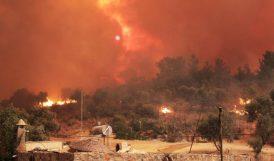 Yangın Eleştirilerine 'Vatana İhanet' Tepkisi!
