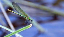 Doğa Dostu Yusufçuklar Doğaya Renk Katıyor