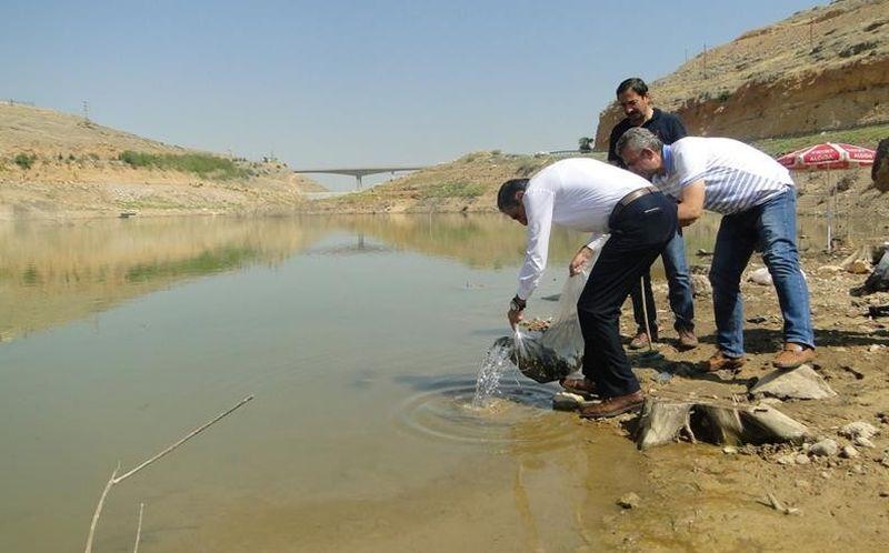Malatya'daki Göletlere 120 Bin Yavru Balık