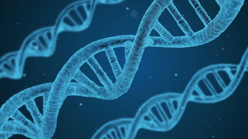 Türk Toplumunun Genetik Kodları Araştırması