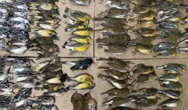 Yüzlerce Kuş Gökdelene Çarpıp Öldü