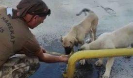 Yavru Köpeklere Elleriyle Su İçirdi